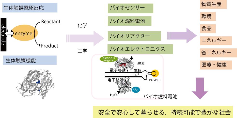 辻村研究室・研究内容